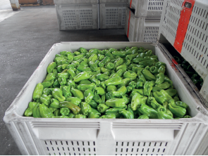 Internal system multiple-use plastic containers may be a cyclical conduit for foodborne pathogen transport, such as Listeria monocytogenes, between field or orchard and packing/processing facilities.