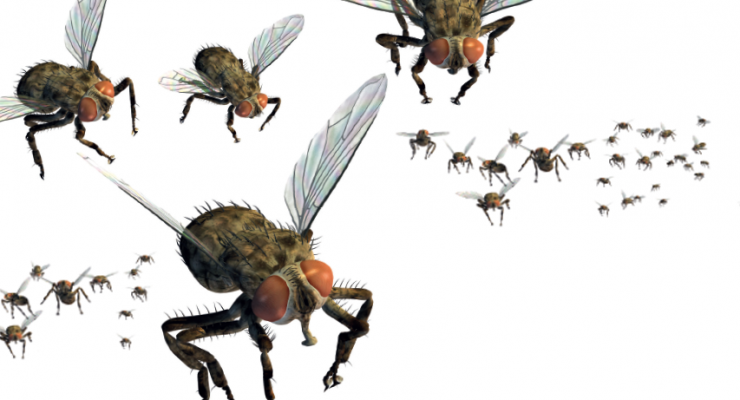 Solving Fly Problems