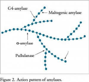 Figure 2: Action pattern of amylases (click for larger image, photo credit: Dupont)