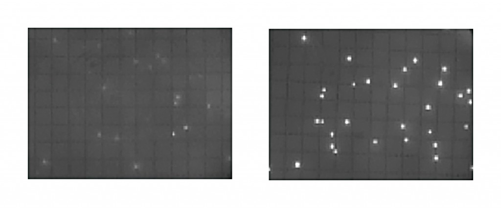 Figure 2: The image on the right illustrates a sufficient fluorescent signal intensity translating into an appropriate incubation time. The picture on the left shows that an accurate count is not possible if the intensity of the fluorescence is too low due to an insufficient incubation time.