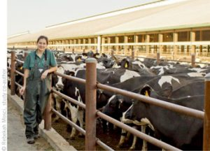 High Temps, Lactation Tied to STEC Shedding in Cattle