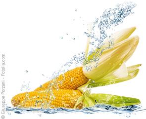 Next Generation Grain Tests Help Make Mycotoxin Testing