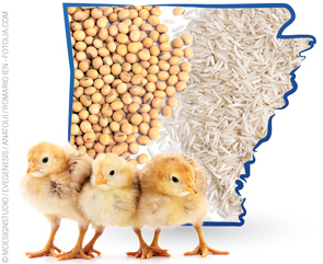 Food Safety Comes Naturally to Arkansas