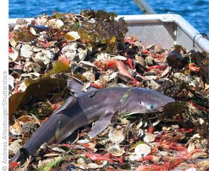 überfischung Beifang