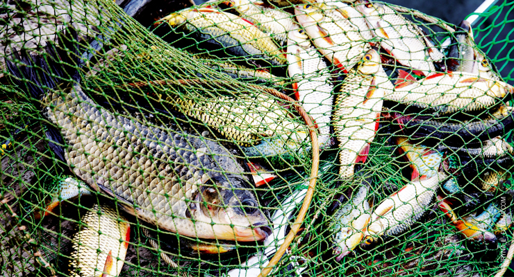 How to Protect Yourself Against Seafood Fraud