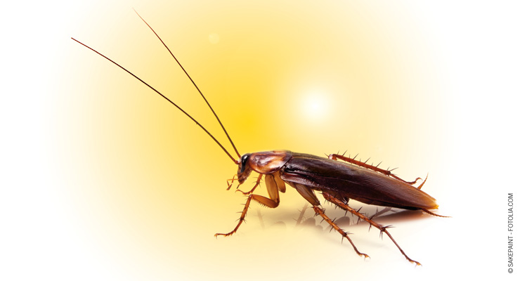 Watch Out for These 3 Summertime Pests
