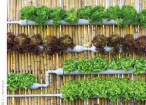 Can Vertical Farms Help Solve Safety Issues?