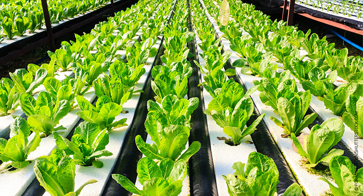 Should Hydroponics and Aquaponics Be Considered Certified Organic?