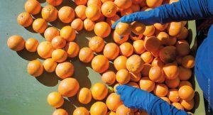 FDA Slammed Over Lax Enforcement