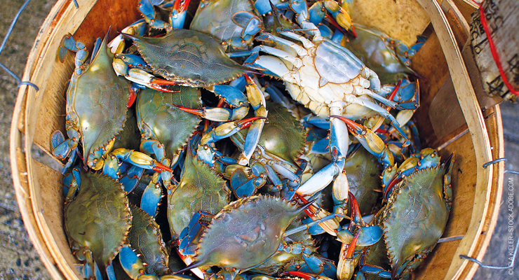 A Look at the Quality and Safety Issues Facing Crustacean Suppliers