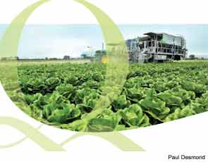At Taylor Farms, New Technologies Make Produce Safer