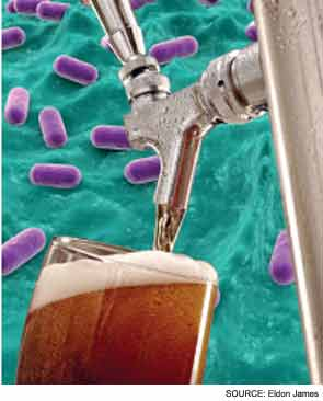 Alternative Tubing Eliminates Bacteria in Beverage Delivery Systems