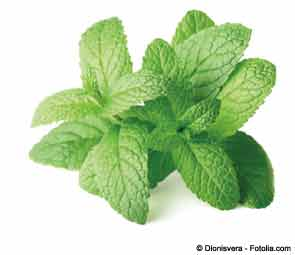 Thin-Layer Infrared Drying of Mint Leaves